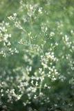 Картина цветка wildflowers Стоковое фото RF