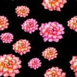 Картина цветков, безшовная картина акварели на темной предпосылке Стоковое Изображение