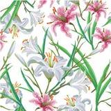 картина цветков безшовная Радужка Лилия вектор вычерченная рука бесплатная иллюстрация