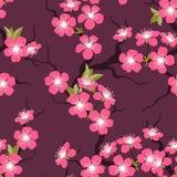 Картина цветков вишневого цвета безшовная Стоковые Фотографии RF