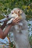 картина человека друга свободной руки собаки rambles стоковая фотография rf