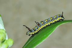 Картина червя Стоковые Фото