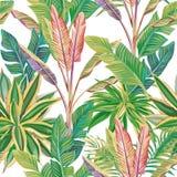 Картина экзотических тропических джунглей безшовная Стоковое Изображение