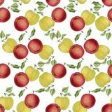 Картина яблок акварели безшовная Стоковая Фотография
