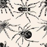 Картина ядовитых пауков Стоковые Изображения