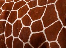 картина giraffe Стоковая Фотография RF