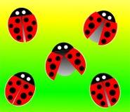 картина ladybird Стоковые Фотографии RF