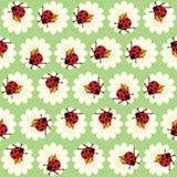 Картина Ladybugs и маргариток Стоковые Фотографии RF