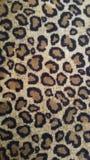 Картина Leppard Стоковое Фото