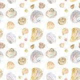Картина seashell цвета акварели естественная иллюстрация вектора