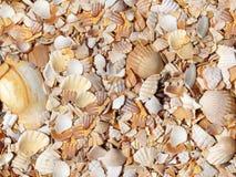Картина Seashells Стоковая Фотография