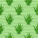 Картина Succulents безшовная Стоковое Фото