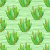 Картина Succulents безшовная Стоковая Фотография RF