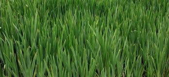 картины абстрактных листьев длинние худенькие Стоковое Изображение RF