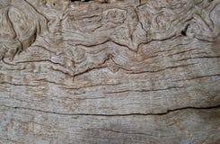 Картины в естественной древесине стоковое изображение