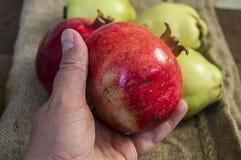 Картины гранатового дерева, изображения естественного органического гранатового дерева приносить, Стоковая Фотография RF