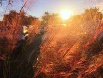 Картины захода солнца Стоковые Изображения