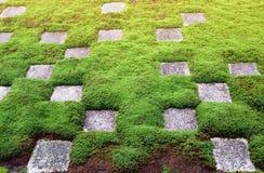 Картины зеленой травы и утеса Стоковые Фото