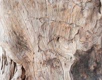 Картины кожи дерева Стоковая Фотография RF