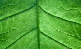 картины листьев Стоковые Фотографии RF