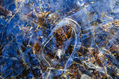 Картины на заводи леса льда Стоковые Фотографии RF