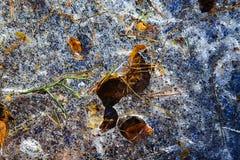 Картины на заводи леса льда Стоковое Изображение RF