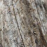 Картины на стволе дерева Стоковая Фотография RF