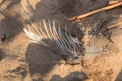 Картины пляжа Стоковые Изображения RF