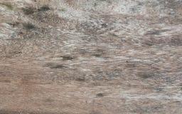 Картины древесины Стоковые Изображения RF