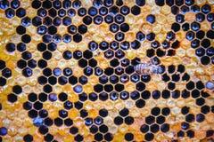 Картины сота текстурируют с взглядом сверху пчелы для предпосылки стоковое фото