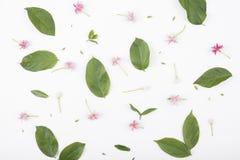 Картины с зелеными листьями и цветками на белой предпосылке Стоковая Фотография RF