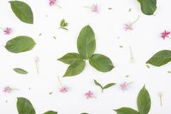 Картины с зелеными листьями и цветками на белой предпосылке Стоковые Изображения RF