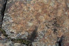 Картины утеса петроглифов старые в горах Altai Стоковая Фотография