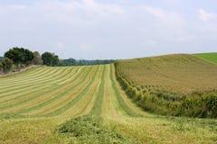 картины хлебоуборки поля Стоковые Изображения