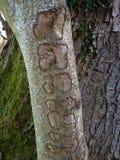 7 картин на дереве Стоковые Изображения RF