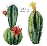 Карточка акварели с зелеными кактусом и цветками Вручите покрашенный cereus при красный и желтый цветок изолированный на белизне Стоковые Фото