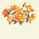 Карточка акварели с желтыми розами сада Стоковые Изображения
