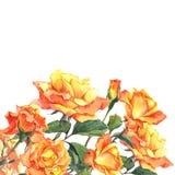 Карточка акварели с желтыми розами сада Стоковая Фотография RF