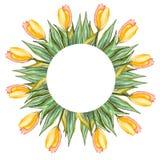 Карточка акварели с тюльпанами Стоковые Изображения