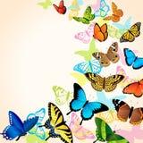 Карточка бабочки иллюстрация вектора