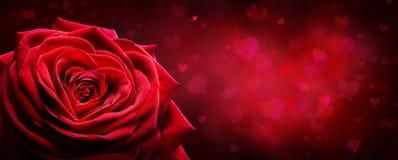 Карточка валентинки - сердце формы красной розы стоковые фото