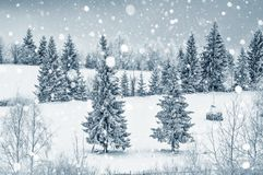 Карточка зимы рождества с елями и снежинками Стоковое Изображение