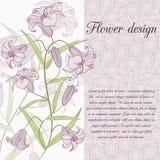 Карточка дизайна лилии Иллюстрация штока