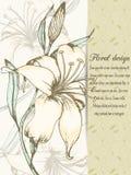 Карточка дизайна лилии Стоковое Изображение