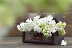 Карточка дня матерей: Белые цветки сирени на деревянной предпосылке Стоковые Фотографии RF