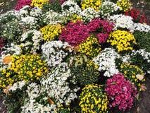 карточка осени легкая редактирует цветки праздник дорабатывает для того чтобы vector Стоковое фото RF