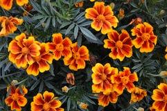 карточка осени легкая редактирует цветки праздник дорабатывает для того чтобы vector стоковые изображения