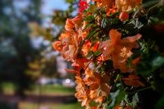 карточка осени легкая редактирует цветки праздник дорабатывает для того чтобы vector стоковая фотография