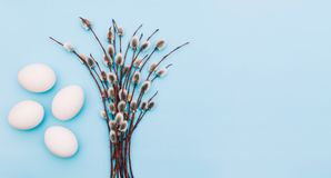 карточка пасха Пушистые цвести ветви дерева и белые яйца на голубой предпосылке Пустой космос для текста над взглядом стоковое изображение