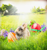 Карточка пасхи с зайчиком, яичками цвета и цветками в траве сада Стоковое Изображение RF